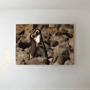 Kissing Penguins Picture Canvas