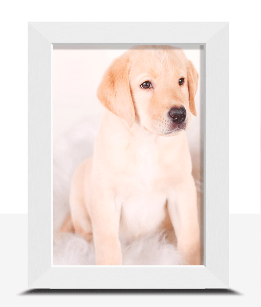 6″ X 4″ Framed Photo Print Photo Gifts